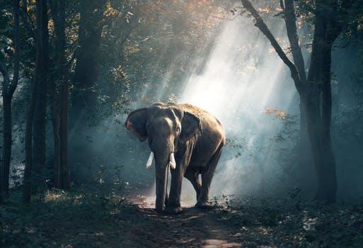 'Iedere mug ziet een stukje olifant'